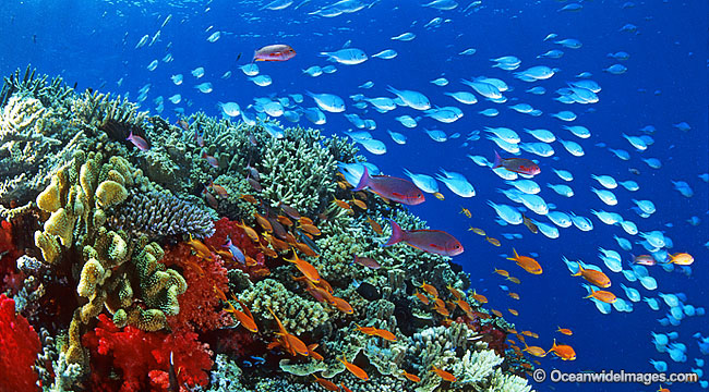 Coral reef and fish photo