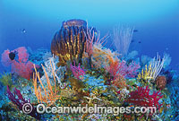 Giant Barrel Sponge and Fan Coral Photo - Gary Bell