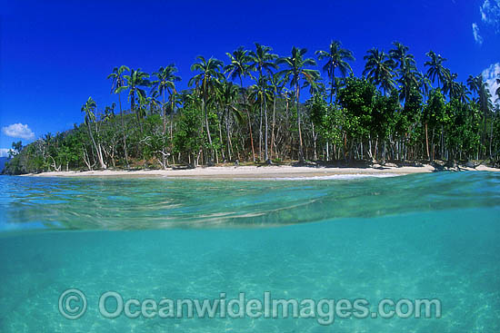 Coastal Seascape. Underwater seascape and coconut palm beach. Fijian Islands Photo - Gary Bell
