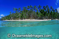 Fiji coconut palm beach Photo - Gary Bell