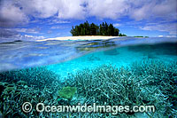 Tropical island Coral reef photo