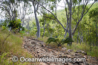 Hiking in Eucalypt forest Hayman Island Photo - Gary Bell