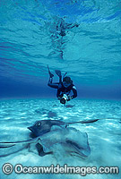 Southern Stingrays Scuba Diver photo