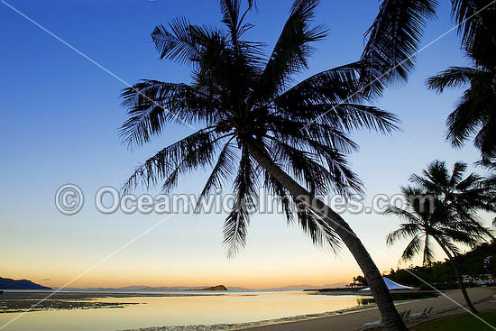 Coconut Island Queensland: Coconut Palm Beach Sunset Photo & Image