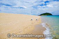 Silver Gulls Whitsunday Islands Photo - Gary Bell