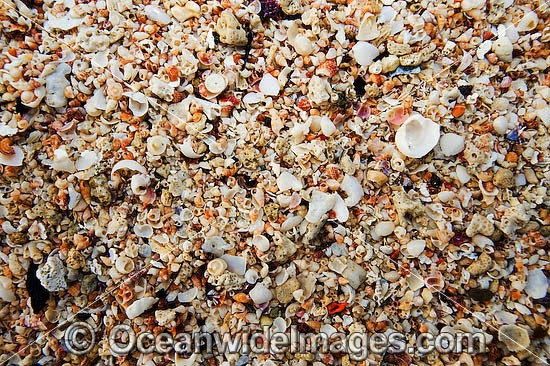 Beach Rubble - comprising of broken coral and sea shells. Great Barrier Reef, Queensland, Australia Photo - Gary Bell