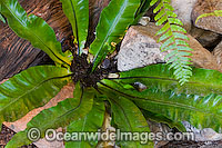 Tropical Garden Plant Photo - Gary Bell