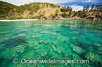 Coral reef Whitsundays Photo - Gary Bell