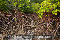 MangroveS Whitsunday Islands Photo - Gary Bell