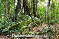 Lamington National Park Rainforest Photo - Gary Bell