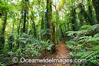 Rainforest Lamington National Park Photo - Gary Bell