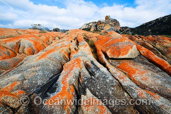 The Dock, an extensive lichen (Caloplaca sp.) covered granite boulder coastline. Flinders Island, Tasmania, Australia Photo - Gary Bell