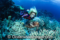 Scuba Diver with Broadclub Cuttlefish photo