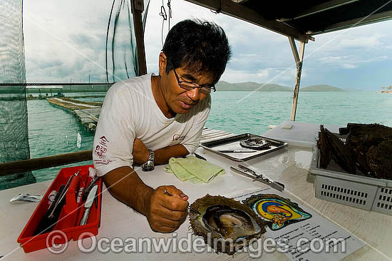 Mr Kazuyoshi Takami, proprietor of Kazu Pearl Farm, dissects a live Pearl Oyster (Pinctada maxima) to demonstrate the seeding procedure. Friday Island, Torres Strait, Queensland, Australia