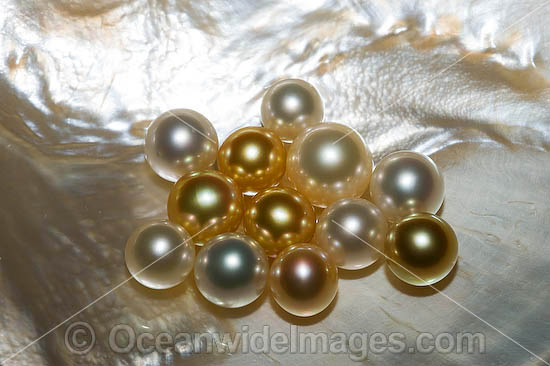 Oyster Pearls photo