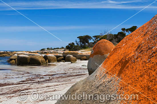 Sawyers Bay Beach, an extensive lichen (Caloplaca sp.) covered granite boulder coastline. Flinders Island, Tasmania, Australia Photo - Gary Bell