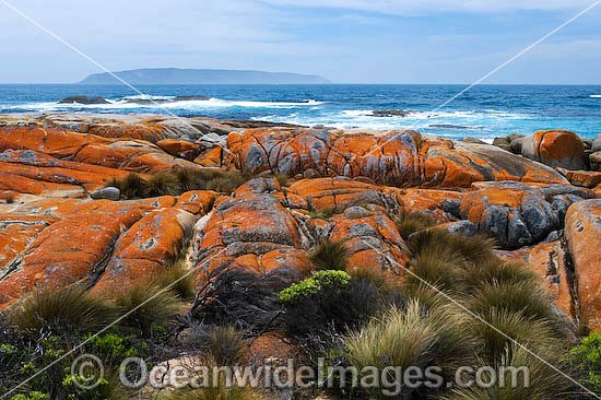 Holloway Point, an extensive lichen (Caloplaca sp.) covered granite boulder coastline, with Sister Island surrounded by early moring fog in distant background. Flinders Island, Tasmania, Australia Photo - Gary Bell