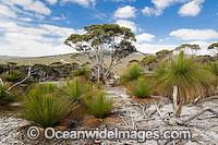 Grass Tree forest Photo - Gary Bell