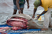Dugong traditional hunting rights image