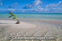 Coconut tropical beach Cocos Islands Photo - Gary Bell