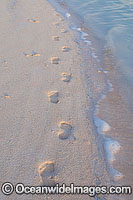 Footprints in sand Cocos Islands Photo - Gary Bell