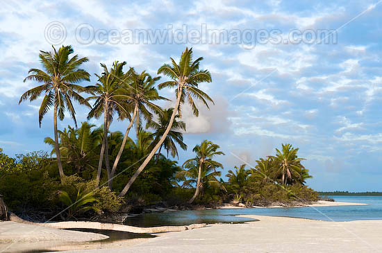 Tropical coconut palm beach and lagoon. Cocos (Keeling) Islands, Indian Ocean, Australia Photo - Gary Bell