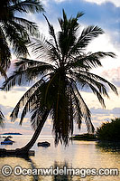 coconut palm beach Cocos Islands Photo - Gary Bell