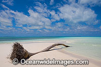 Coconut palm tropical beach Photo - Gary Bell
