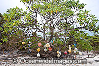 Fishing floats Cocos Keeling Islands Photo - Gary Bell