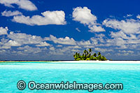 Tropical island coconut palms Photo - Gary Bell