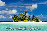 island coconut palms Photo - Gary Bell