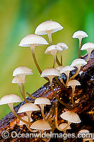 Rainforest Fungi photo