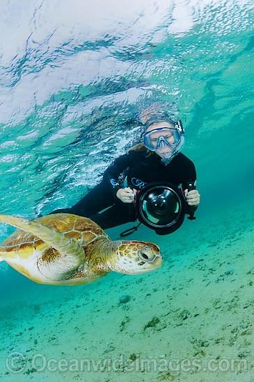 Seguendo una loggerhead turtle