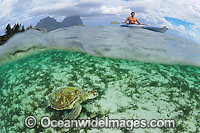 Kayaker with Green Sea Turtle Photo - Justin Gilligan