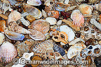 Sea Shells and Coral