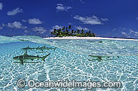 Blacktip Reef Shark Cocos Island Photo - Gary Bell