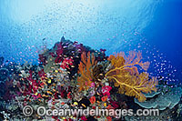 Underwater reef scene photo