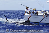 Blue Marlin and snooter Photo - John Ashley