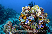 Reef scene of Ascidians and Tunicates Photo - Michael Patrick O'Neill