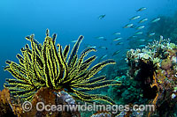 Feather Star Photo - Michael Patrick O'Neill
