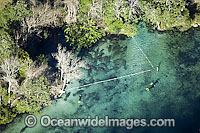 Aerial of Florida Manatees Photo - Michael Patrick O'Neill