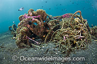 Garbage on Coral Reef Photo - Michael Patrick O'Neill