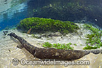 Clear River with weed and limestone stock photo