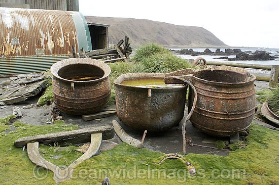 Macquarie Island Base, Historic boiling pots for seal oil. Macquarie Island, Australian Sub-Antarctic Photo - Inger Vandyke
