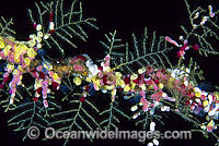 Sea Tunicates and Hydroids Photo - Gary Bell
