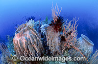 Barrel Sponge Feather Stars and Whips photo