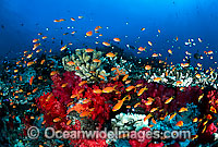 Fish and coral photo