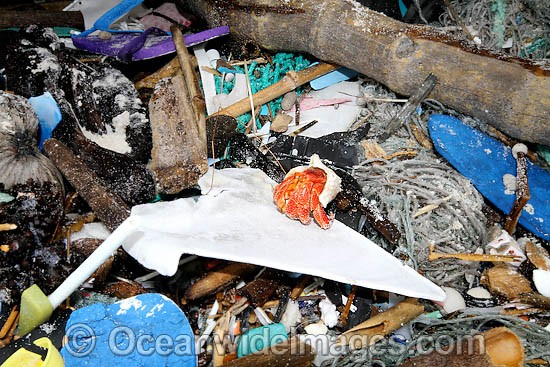 Hermit Crab existing in marine pollution rubbish trash garbage comprising of plastic bottles, footwear and fishing implements, washed ashore by tidal movement on a remote tropical island beach. Cocos (Keeling) Islands, Indian Ocean, Australia Photo - Inger Vandyke