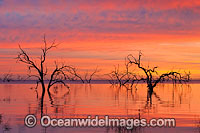Lake Menindee at sunrise Photo - Gary Bell