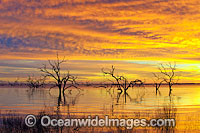 Lake Menindee sunrise Photo - Gary Bell